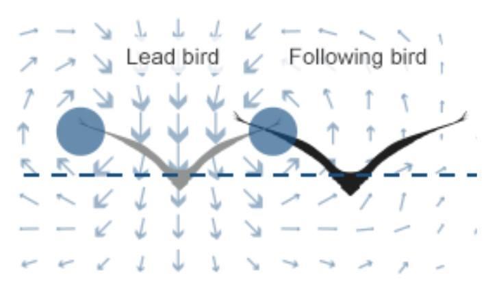 Uccelli formazione V