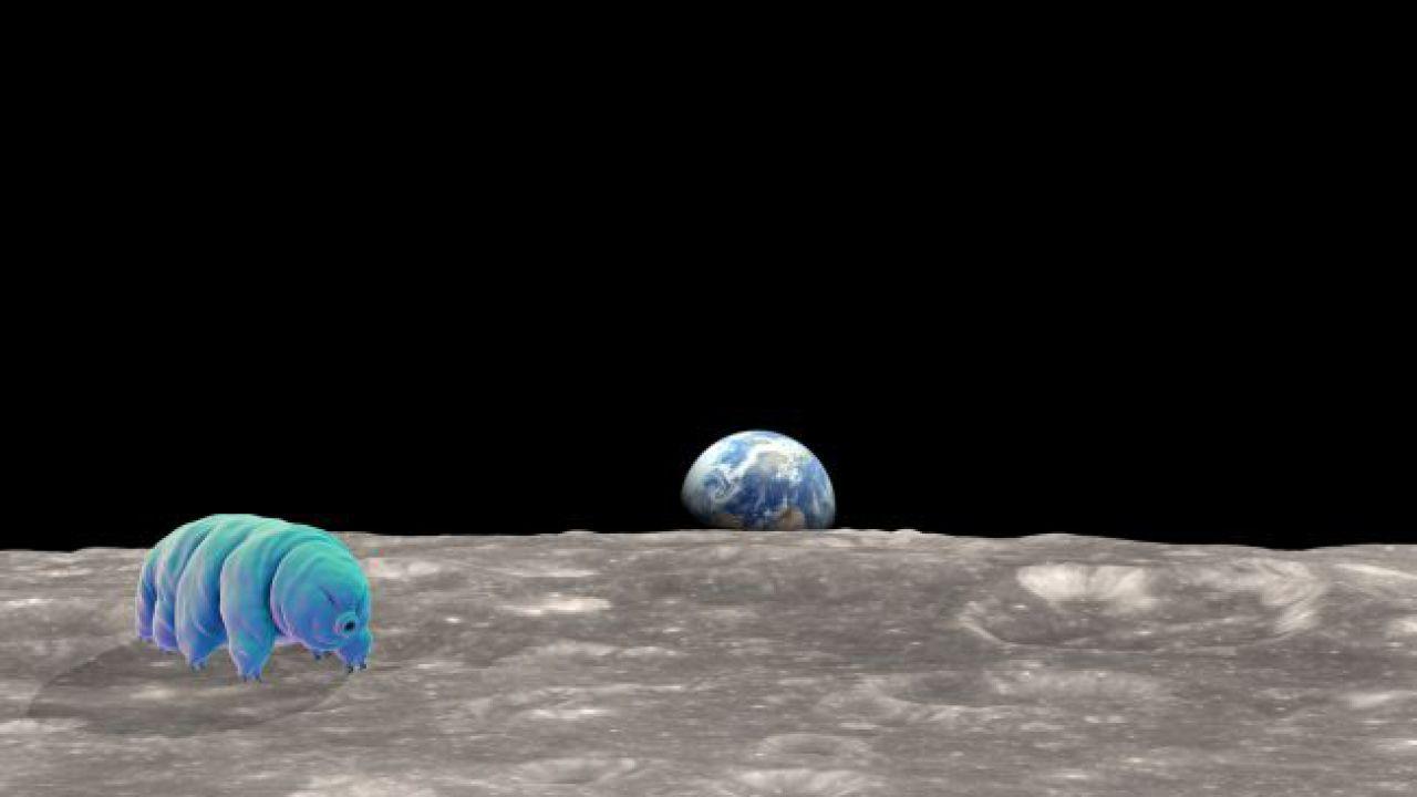 Tardigradi sulla Luna