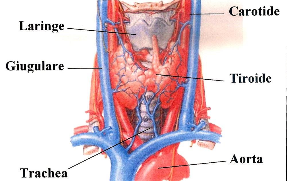 Giugulare interna collo